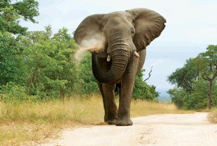 Elephant Spray Botswana Africa RR