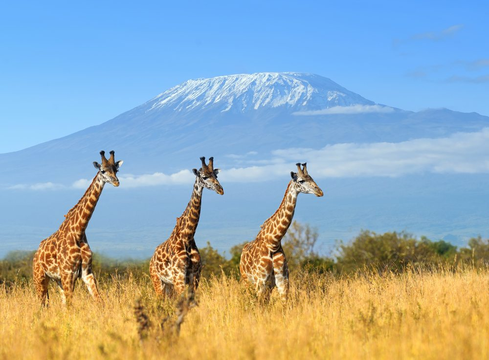 Kenya Kenya National Park African Travel Specialists