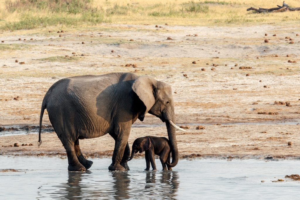Hwange National Park Elephant Calf Zimbabwe African Travel Specialists