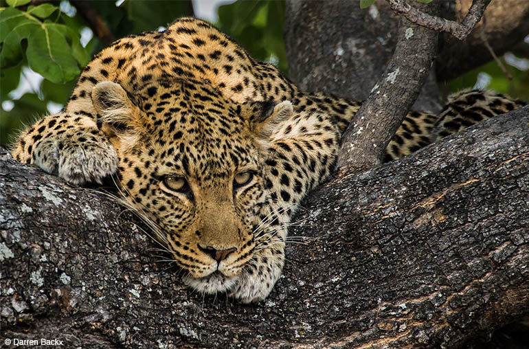 leopard african travel specialists