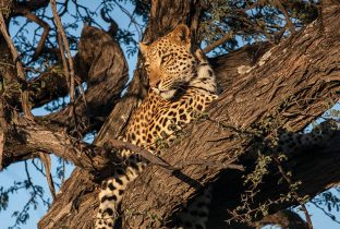 Leopard Tree RR African Travel Specialists