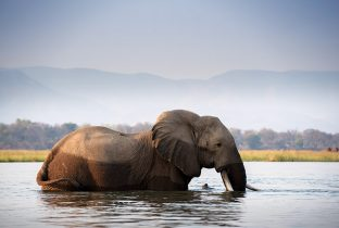 Zambezi Elephant Nyamatusi Camp African Travel Specialists