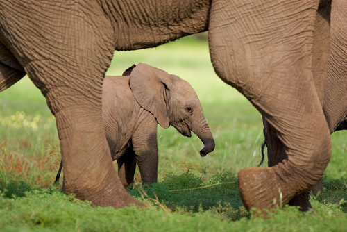 Baby Elephant South Luangwa Zambia African Travel Specialists Africa