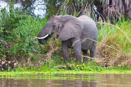 Lake Manza Selous Game Reserve Elephant Tanzania African Travel Specialists