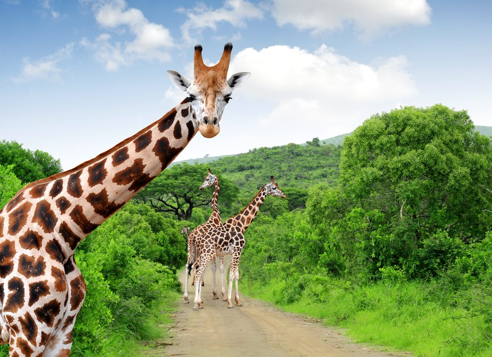Kruger National Park South Africa African Travel Specialists
