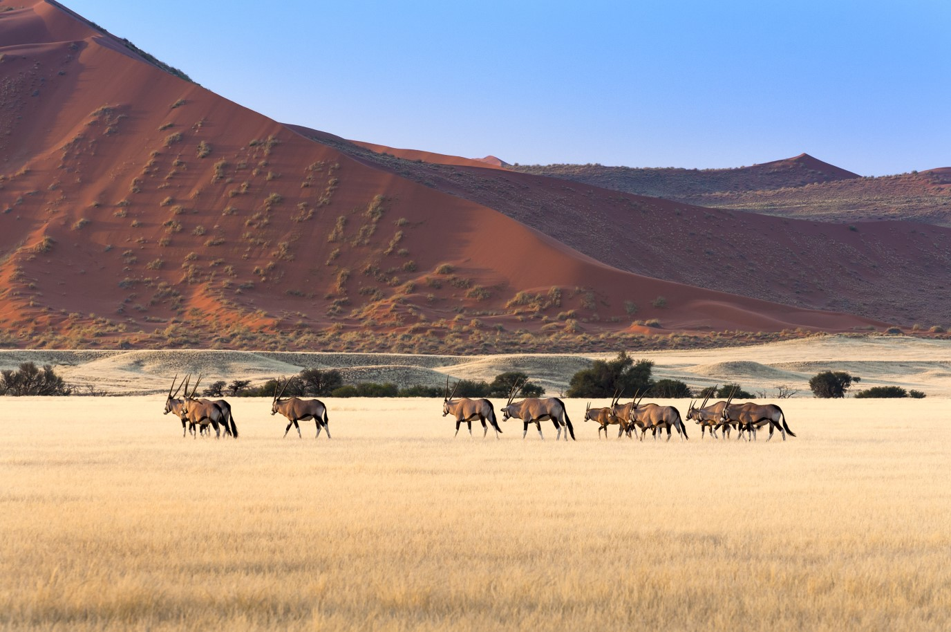 Gembok Sossusvlei Namibia African Travel Specialists