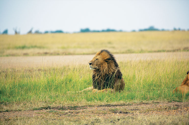 Lion RR Africa African Travel Specialists