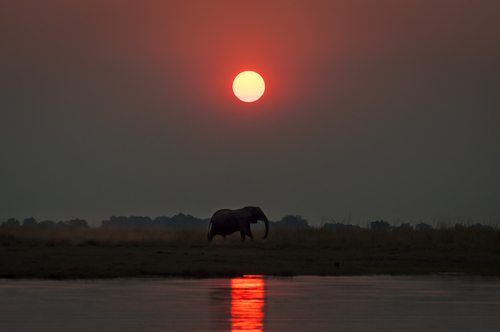 Chobe National Park Elephant African Travel Specialists Zambezi Botswana