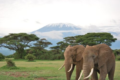 Mt Kilimanjaro Elephants Tanzania Africa Adventure African Travel Specialists