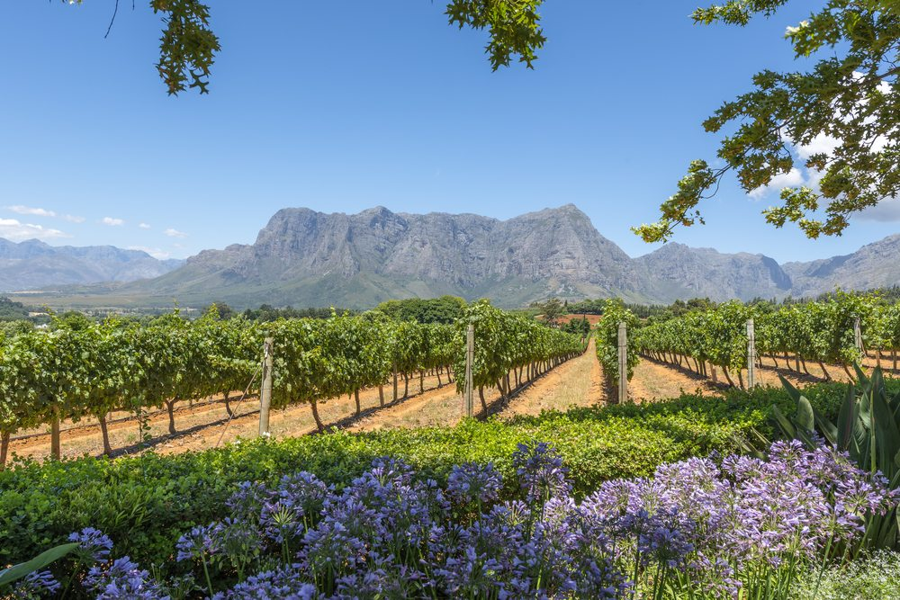 South Africa Cape Winelands African Travel Specialists