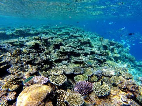 Como Cocoa Island Maldives Diving Maldives Snorkelling Honeymoon destination Maldives India Tours and Travel Specialists