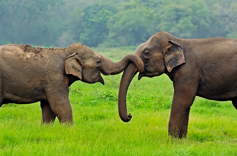 ultimate sri lanka wildlife safari sri lanka elephants india tours and travel specialists