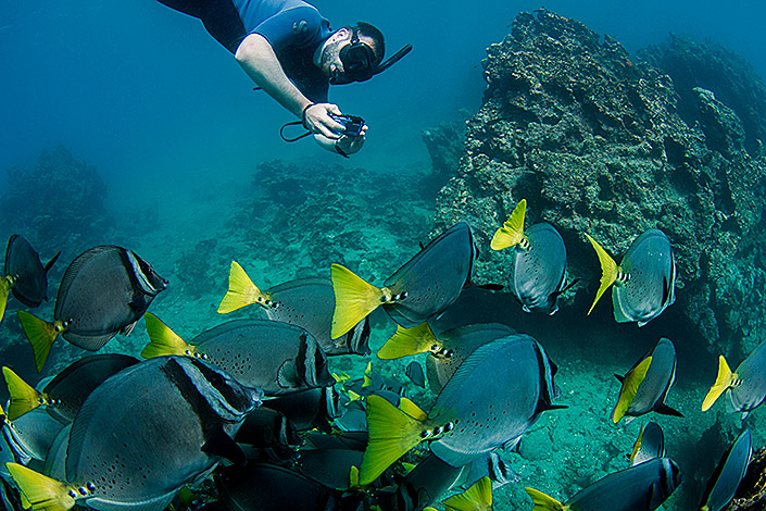 Diving Yellow tailed Surgeon Fish Ecuador Galapagos Islands Galapagos Luxury Cruise South America South American Travel Specialists