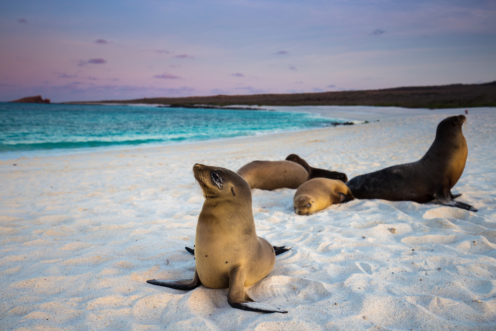 Galapagos Islands Galapagos Sea Lion Ecuador South America South American Travel Specialists