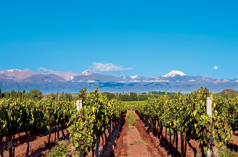 Mendoza Wines Mendoza Vineyards Andes Mountains Argentina South America South American Travel Specialists