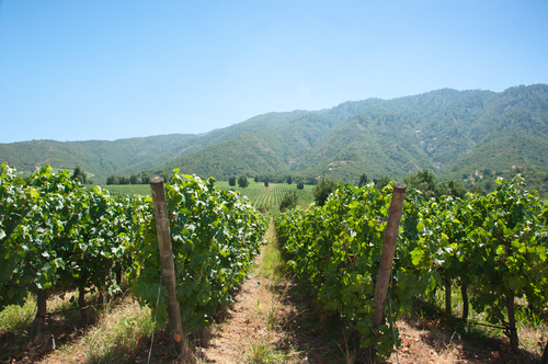 Santa Cruz Chile Wine in Chile  Colchagua Valley South America South American Travel Specialists