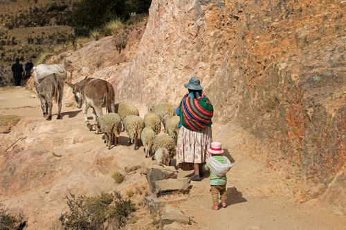 Bolivian Shepherd Lake Titicaca Puno to La Paz South America South American Travel Specialists