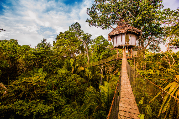 Tree House Lodge Peruvian Amazon Jungle Lodges Amazon Peru South America South American Travel Specialists