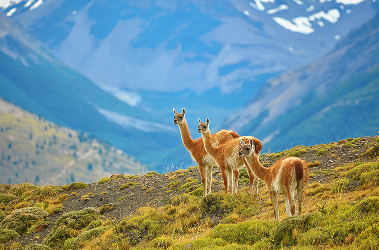 Wonders of patagonia South American Travel Specialists South America