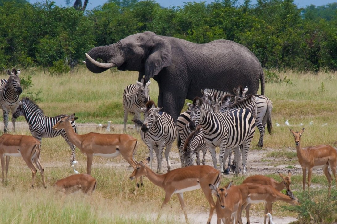 Africa African Travel Specialists Botswana Botswana Fly-in Safari Chobe Game Lodge