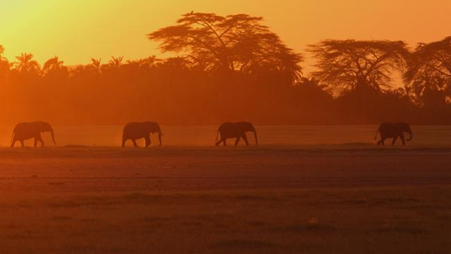 Kenya  Fly In Safari Elephants at Sunset Tsavo West National Park Kenya African Travel Specialists Africa