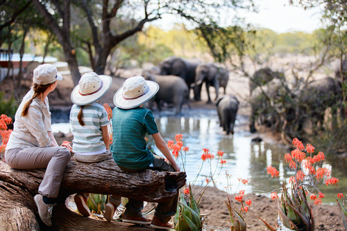 South Africa Family Safari Elephant Family South Africa Wildlife Safari Africa African Travel Specialists