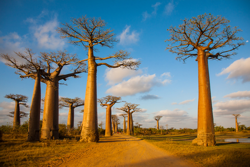 Madagascar Southern Explorer Baobab Alley Madagascar African Travel Specialists Africa