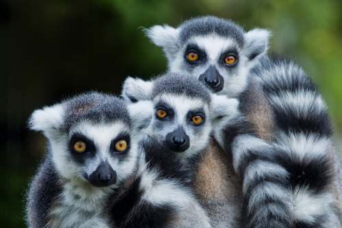 Madagascar Beach and Lemurs NosyBe Beach Madagascar African Travel Specialists Africa