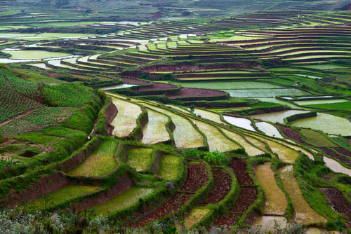 Madagascar Southern Explorer Rice fields Madagascar African Travel Specialists Africa