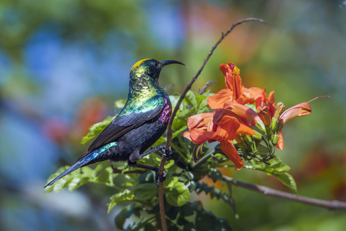 Marquee Sunbird Kruger national park South Africa African Travel Specialists Africa South Africa Family Safari