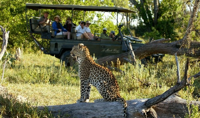 Experience a Botswana Luxury Fly-in Safari, with The African Travel Specialists, while staying at Mombo Camp situated in the heart of the Okavango Delta