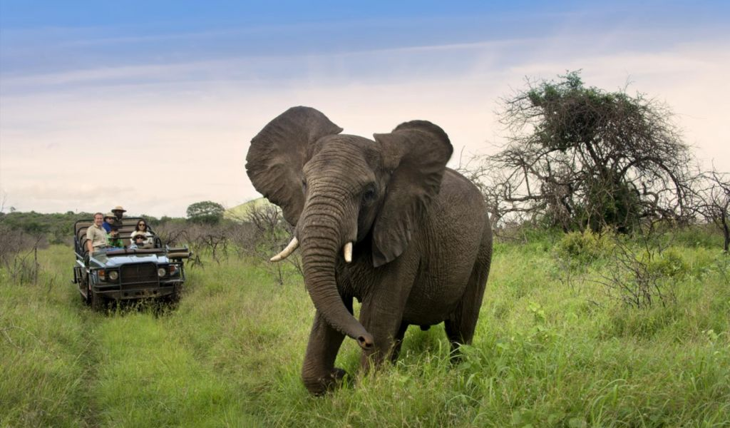 Phinda Game Reserve Phinda Mountain Lodge South Africa Africa African Travel Specialists