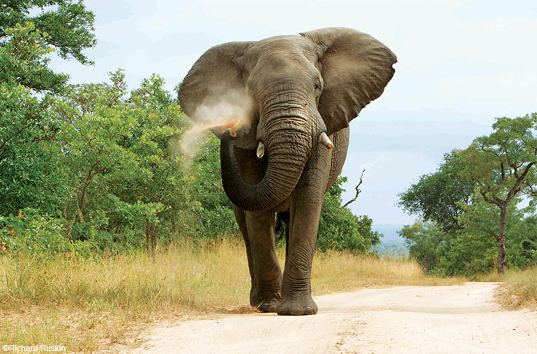 Kruger & Botswana Safari Wildlife African Safari Africa Travel Specialists.