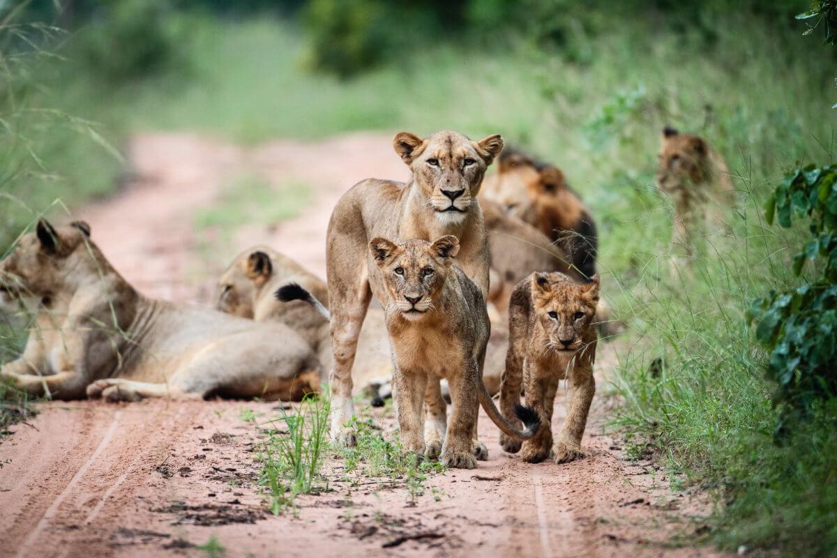 Royal Malewane Kruger National Park South Africa Africa African Travel Specialists