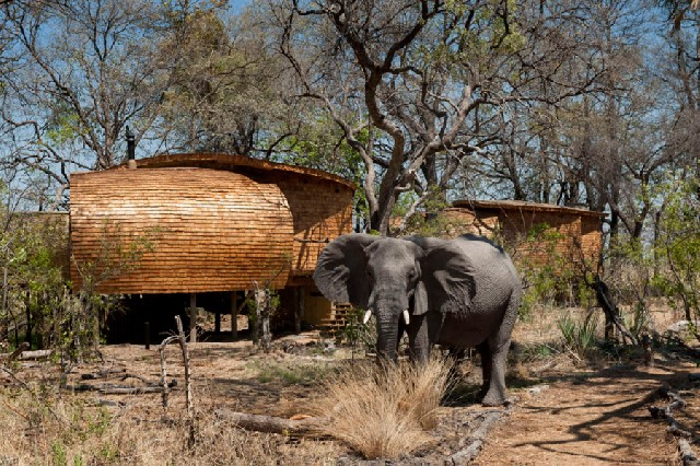 Experience a Botswana Luxury Fly-in Safari, with The African Travel Specialists, while staying at Sandibe Okavango Safari Lodge.