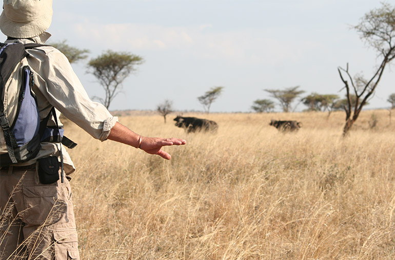 Serengeti National Park Tanzania African Travel Specialists walking safari africa