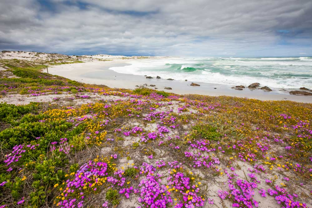 South Africa African Travel Specialists Garden Route