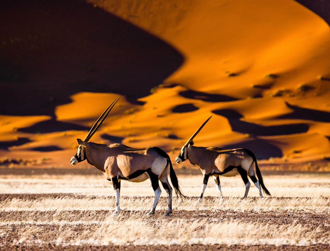 Sossusvlei Namibia African Travel Specialists Africa