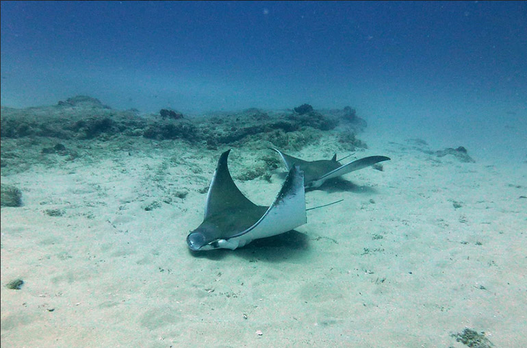 bahia mar snorkeling stingray mozambique africa african travel specialists