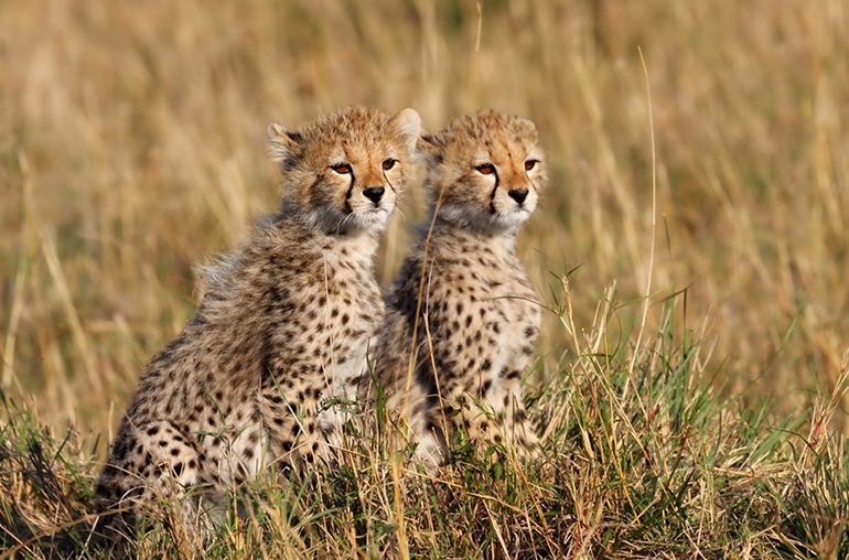 Kruger Family Safari African Travel Specialists Africa
