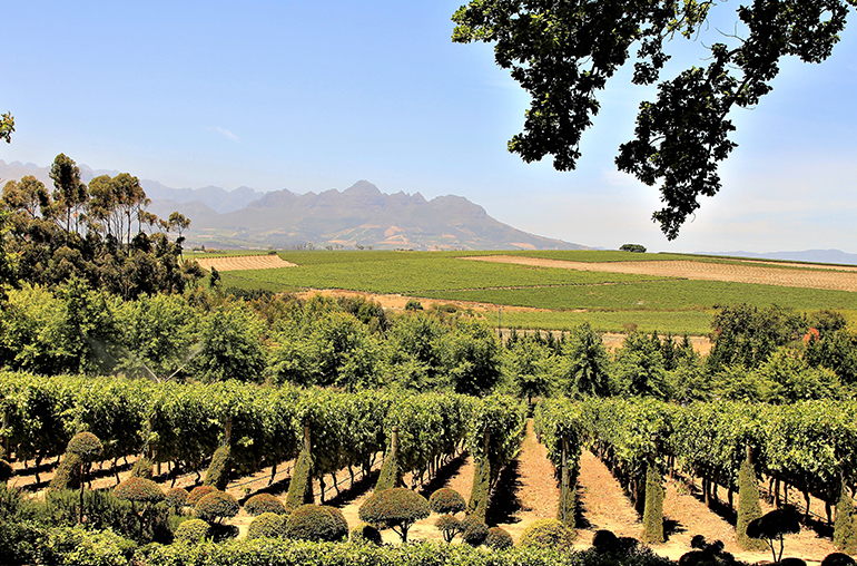 Luxury Wine Journey African Travel Specialists South Africa