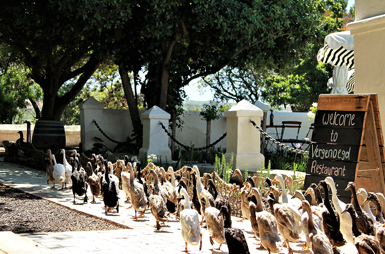 Luxury Wine Journey African Travel Specialists Vergenoegd South Africa
